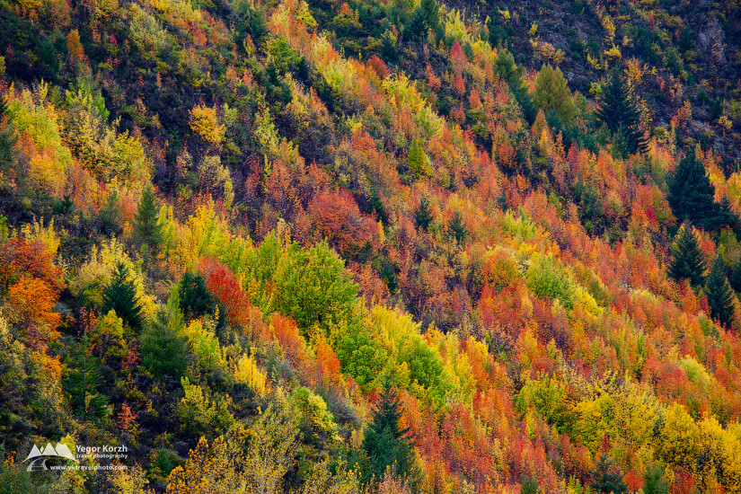 Autumn Colours, Arrowtown, South Island, New Zealand